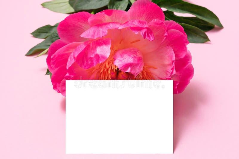 Modelo do cartão de Minimalistic com flor da peônia Cartão isolado imagem de stock