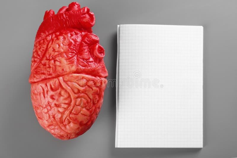 Modelo do coração e do caderno vazio no fundo cinzento foto de stock royalty free