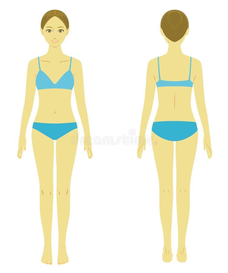 Modelo do corpo da mulher ilustração do vetor