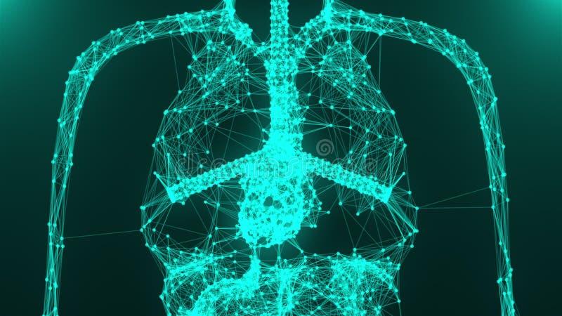 Modelo do corpo humano da anatomia com pontos da conexão, 3d que rende o fundo, conceito médico ilustração stock