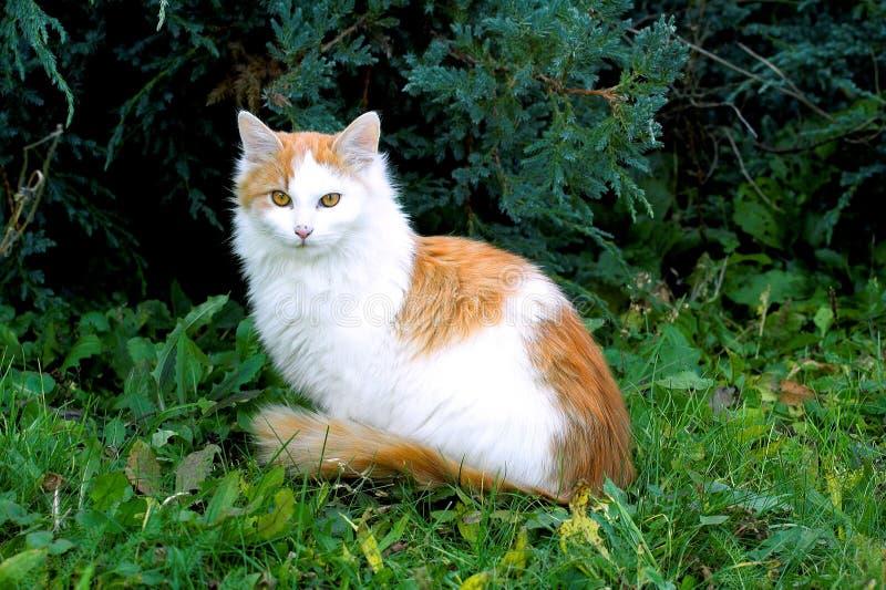 Modelo do gato fotografia de stock
