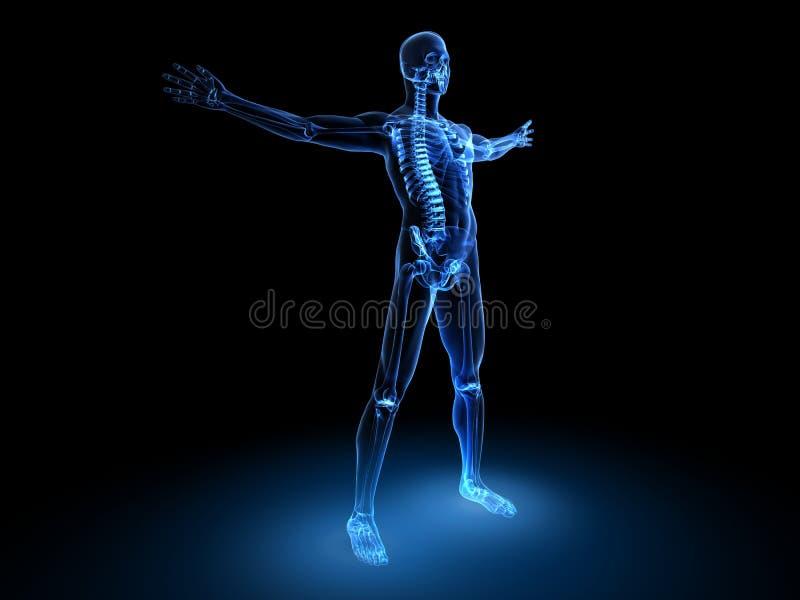 Modelo do macho do raio X ilustração royalty free