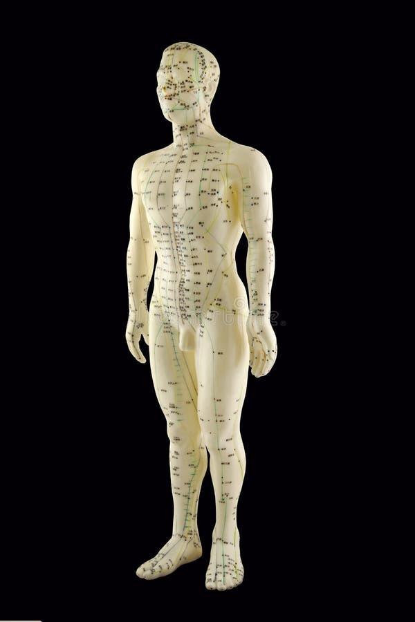 Modelo do meridiano da acupuntura imagens de stock