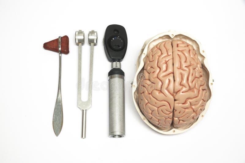 Modelo e equipamento do cérebro foto de stock