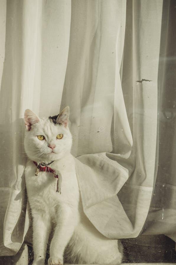 Modelo felino en blanco imagen de archivo