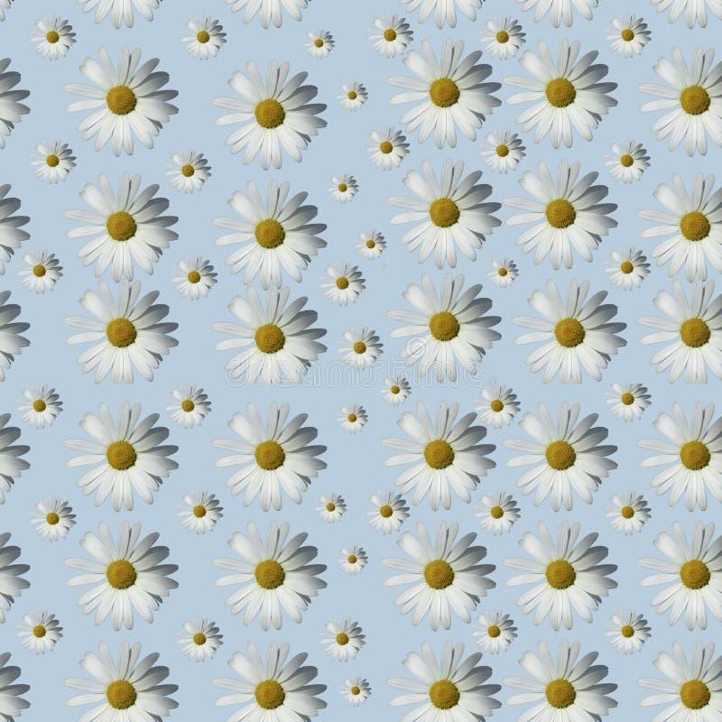 Modelo floral de la manzanilla en un fondo azul Capa plana fotografía de archivo libre de regalías