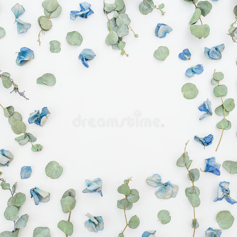 Modelo floral del marco de flores y del eucalipto azules secos en el fondo blanco, endecha plana, visión superior Fondo floral imagen de archivo