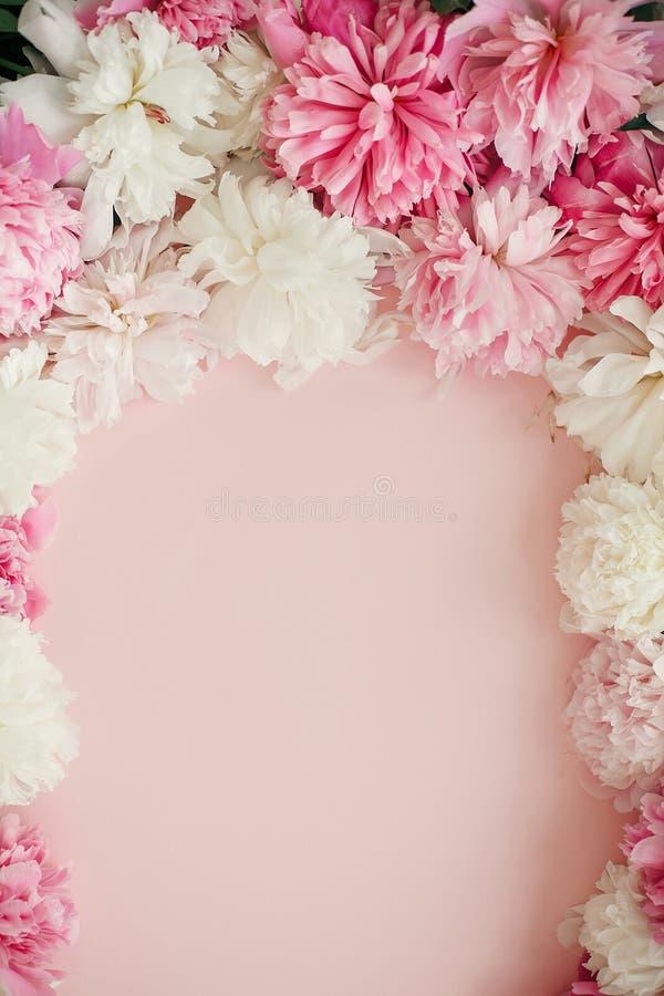 Modelo floral feliz do cartão do dia de mães As peônias à moda colocam horizontalmente Quadro do rosa e o branco das peônias no p fotografia de stock
