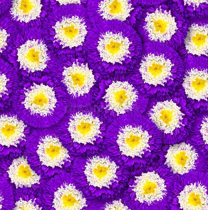 Modelo floral inconsútil Arreglo caótico de flores Flor del púrpura y blanca del aster imagen de archivo