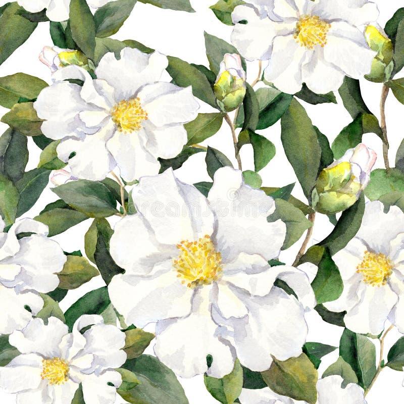 Modelo floral inconsútil con las flores Pintura de la acuarela en el fondo blanco libre illustration