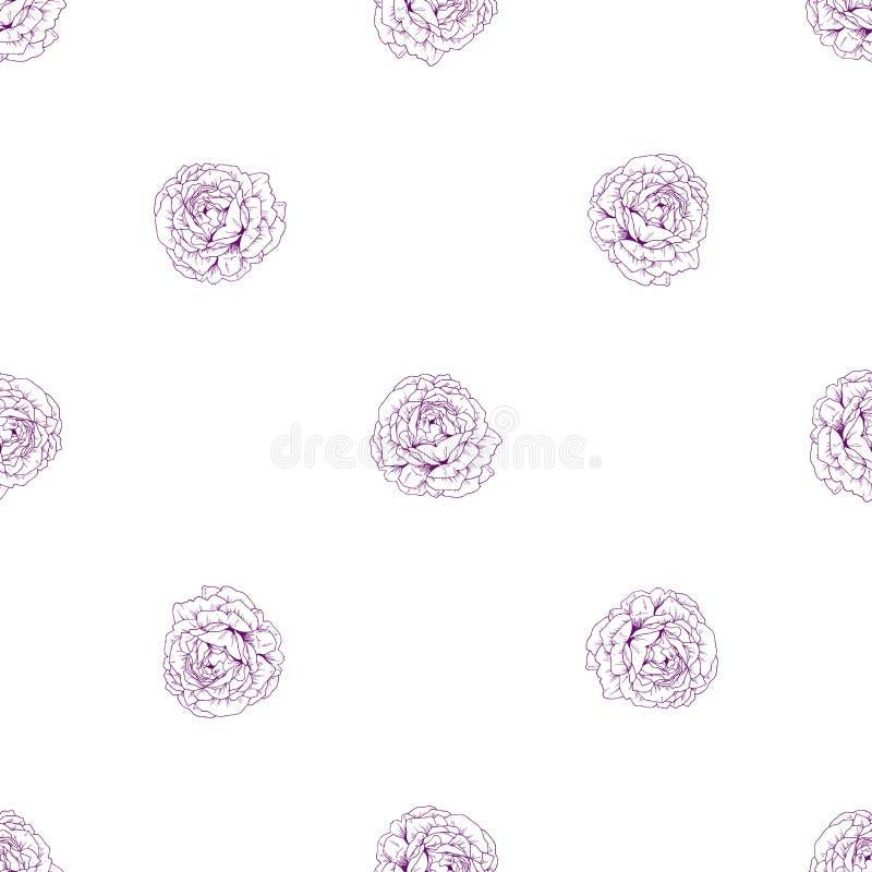 Modelo floral inconsútil de la vendimia Brotes de flor color de rosa hermosos en un blanco Fondo exhausto del vector de la mano a stock de ilustración