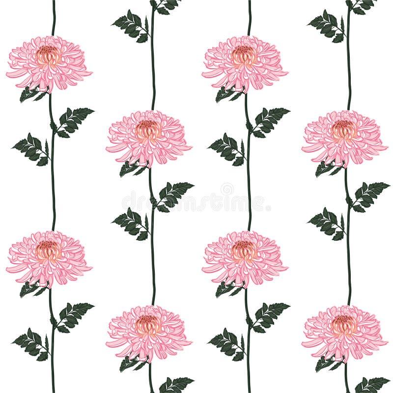 Modelo floral incons?til del vector Flores rosadas japonesas florecientes del crisantemo del rosa Ejemplo en la línea vertical di libre illustration