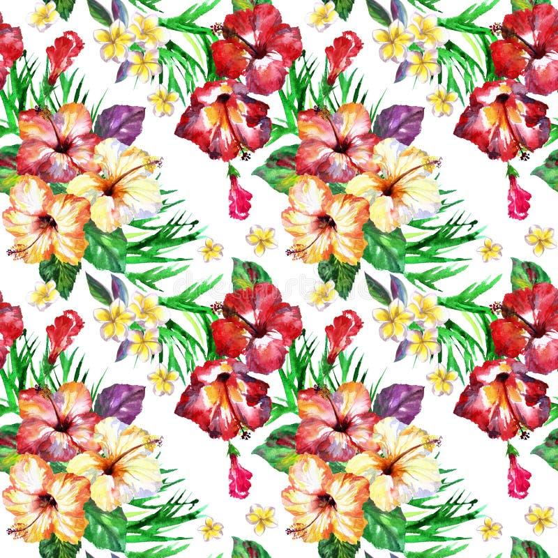 Modelo floral tropical La acuarela pintada florece plumeria Frangipani exótico blanco de la flor que repite el contexto ilustración del vector