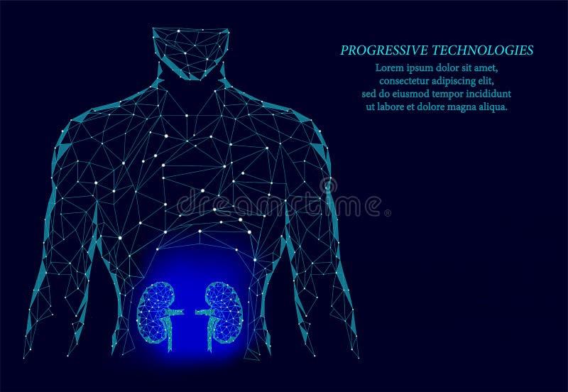 Modelo geométrico 3d para os órgãos internos dos rins Tratamento médico do sistema urologico Tecnologia da ciência do futuro Azul fotos de stock royalty free