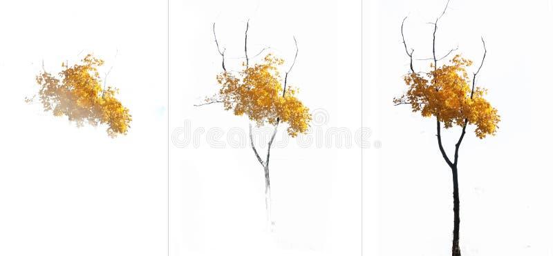 Modelo gradual del arce con las hojas amarillas ilustración del vector