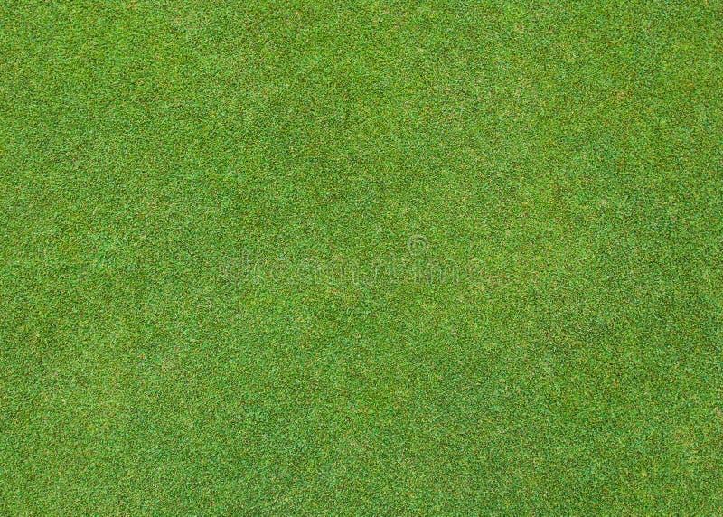 Modelo hermoso de la hierba verde fotografía de archivo libre de regalías