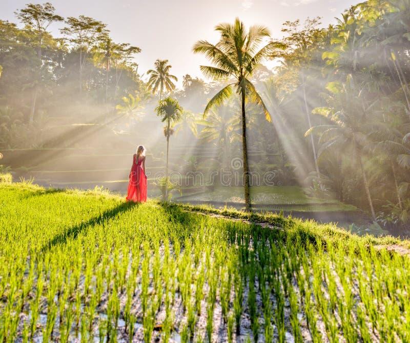 Modelo hermoso en vestido rojo en la terraza 5 del arroz de Tegalalang fotos de archivo libres de regalías