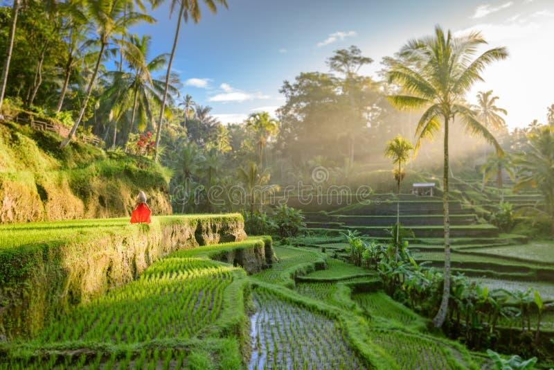 Modelo hermoso en vestido rojo en la terraza 12 del arroz de Tegalalang foto de archivo libre de regalías