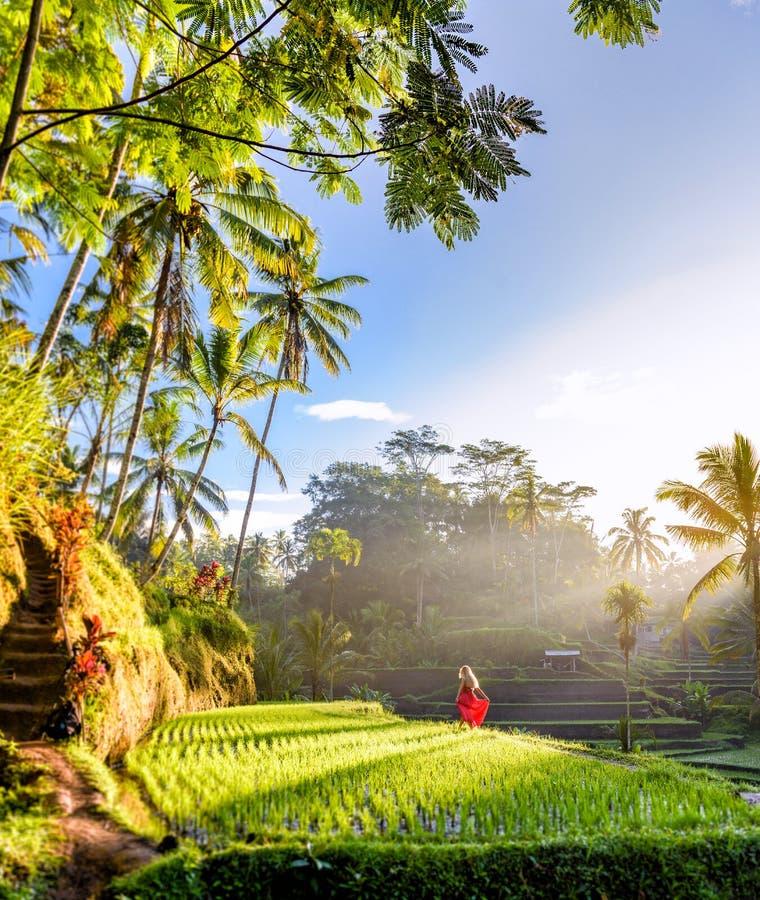 Modelo hermoso en vestido rojo en la terraza 14 del arroz de Tegalalang fotografía de archivo