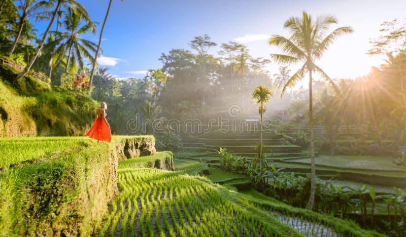 Modelo hermoso en vestido rojo en la terraza 15 del arroz de Tegalalang imágenes de archivo libres de regalías