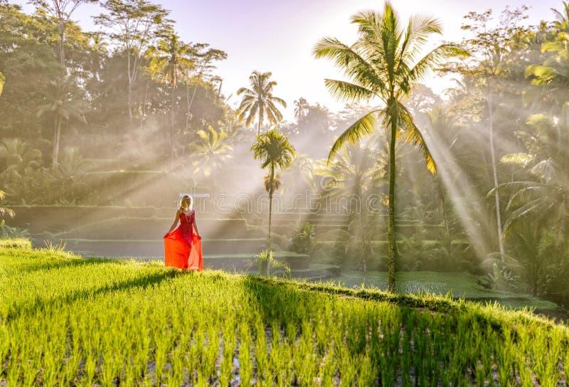 Modelo hermoso en vestido rojo en la terraza 16 del arroz de Tegalalang fotos de archivo