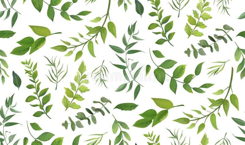 Modelo inconsútil árbol del helecho de la palma del eucalipto de diverso, follaje libre illustration