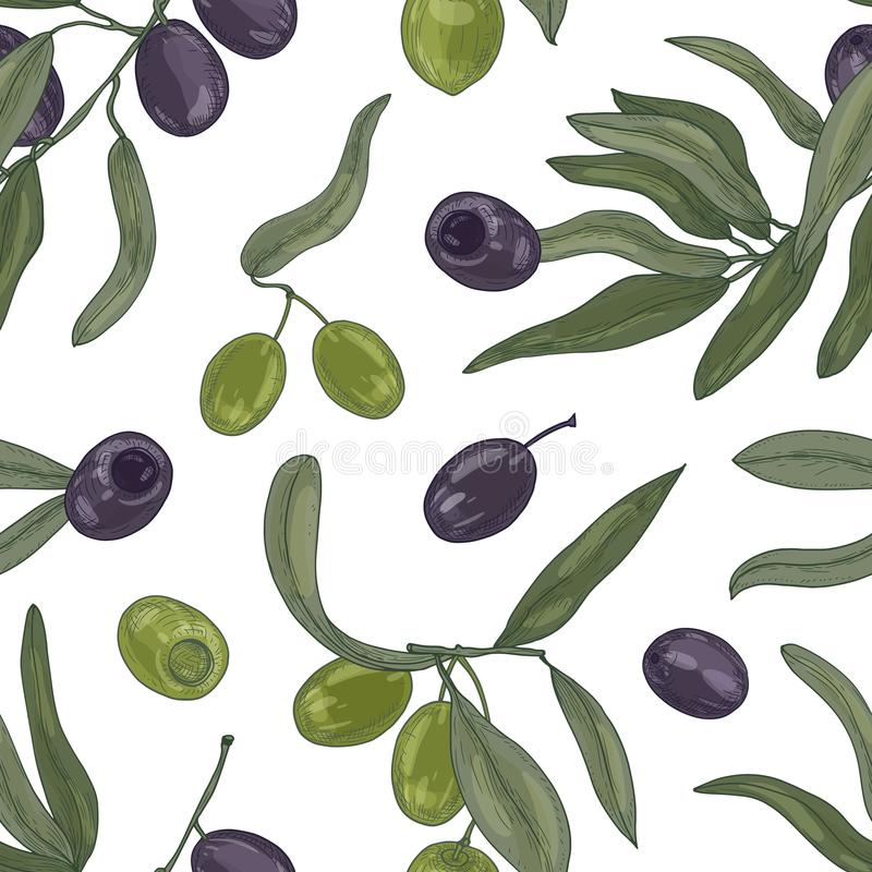 Modelo inconsútil botánico con las ramas de olivo orgánicas, hojas, frutas maduras negras y verdes o drupas en blanco stock de ilustración