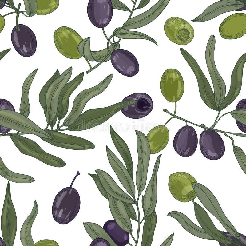 Modelo inconsútil botánico elegante con las ramas de olivo con las hojas, frutas maduras negras y verdes o drupas en blanco ilustración del vector