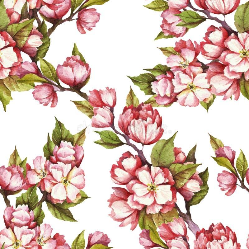 Modelo inconsútil con las flores de cerezo Ilustración de la acuarela libre illustration