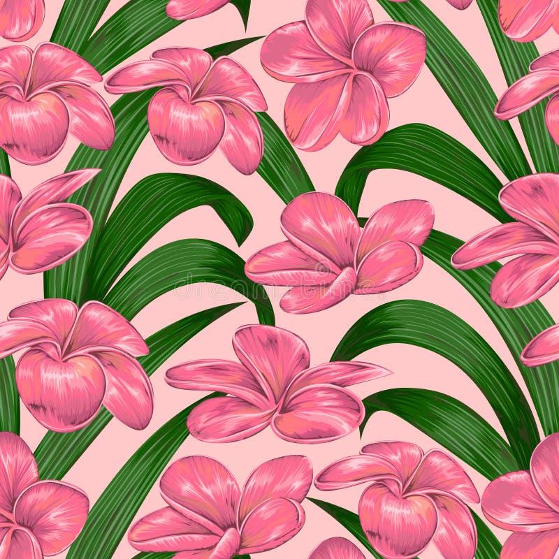Modelo inconsútil con las flores rosadas tropicales del plumeria Fondo botánico floral exótico ilustración del vector