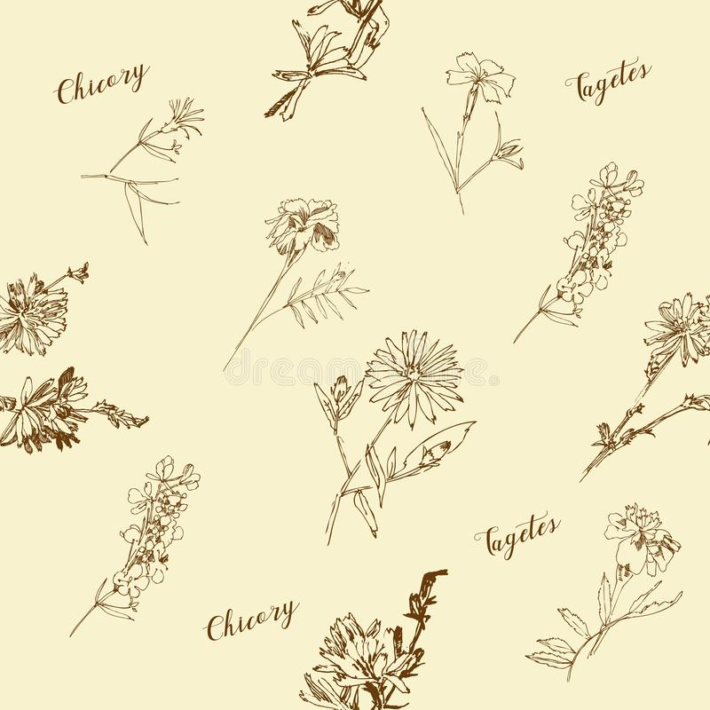 Modelo inconsútil con las flores salvajes con bosquejos botánicos del verano libre illustration