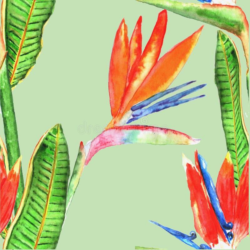 Modelo inconsútil con las flores tropicales watercolor Mano drenada stock de ilustración