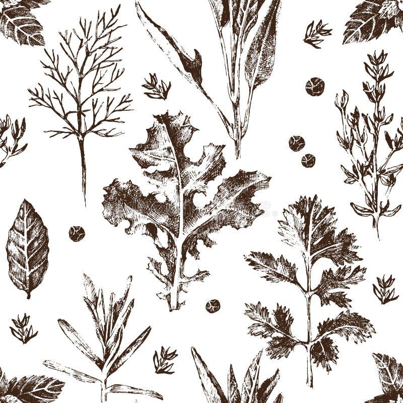 Modelo inconsútil con las hierbas y las especias dibujadas mano libre illustration