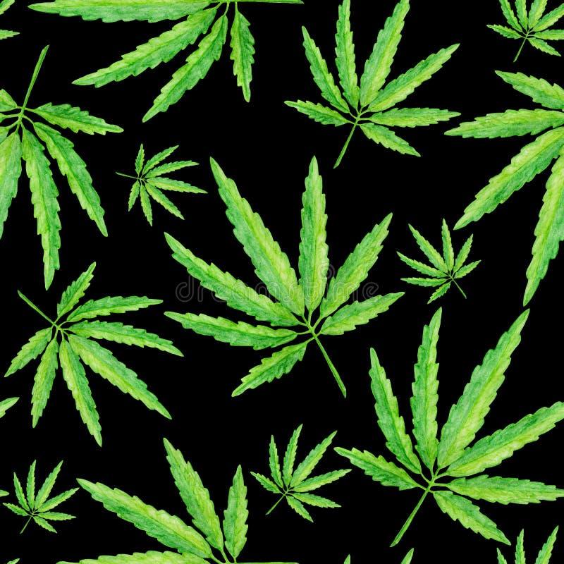 Modelo inconsútil con las hojas verdes del cáñamo, planta exhausta de la mano en fondo negro stock de ilustración
