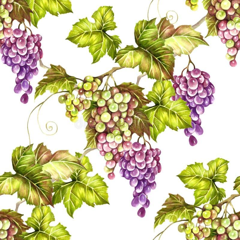 Modelo inconsútil con las uvas Ejemplo de la acuarela del drenaje de la mano ilustración del vector
