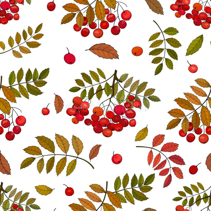 Modelo inconsútil con los manojos del otoño de bayas de serbal en una puntilla con las hojas y de gotas del serbal en un fondo bl libre illustration