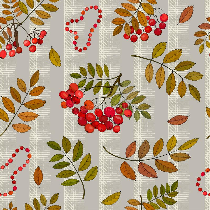 Modelo inconsútil con los manojos del otoño de bayas de serbal en una puntilla con las hojas y las gotas del serbal imagen de archivo libre de regalías