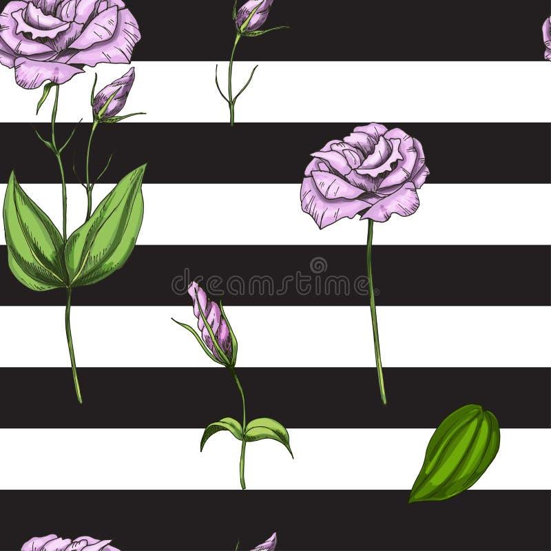 Modelo inconsútil con suavemente la flor de la rosa del rosa aislada en fondo rayado blanco y negro Ilustración del vector ilustración del vector