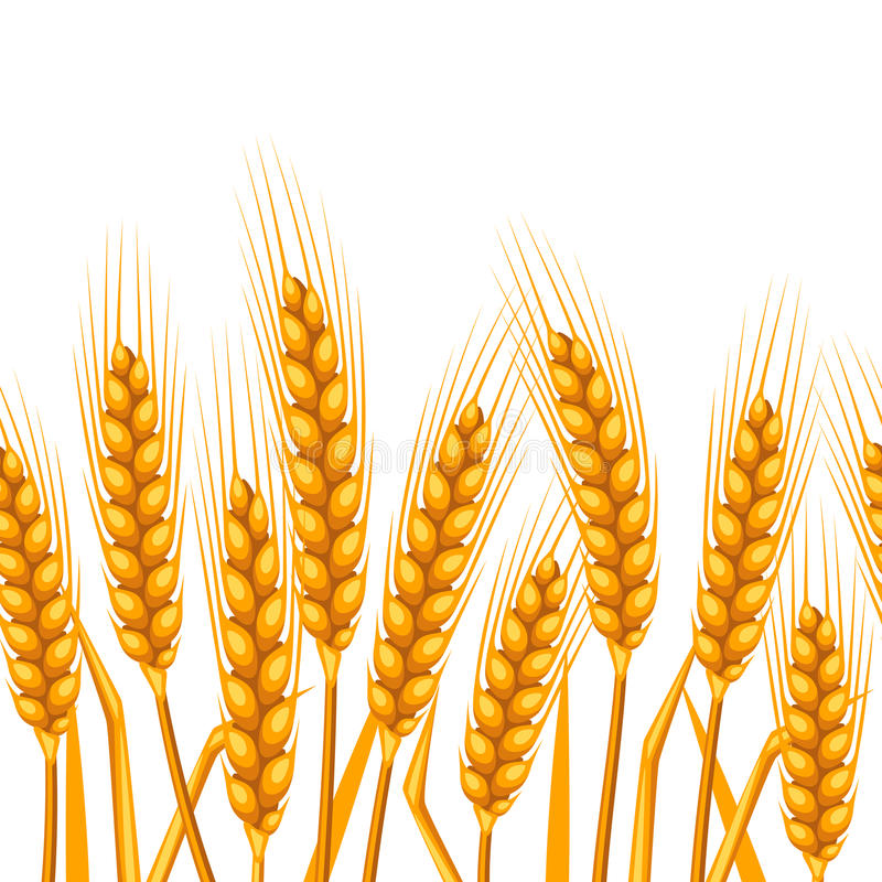 Modelo inconsútil con trigo Oídos de oro naturales de la imagen agrícola de la cebada o del centeno libre illustration