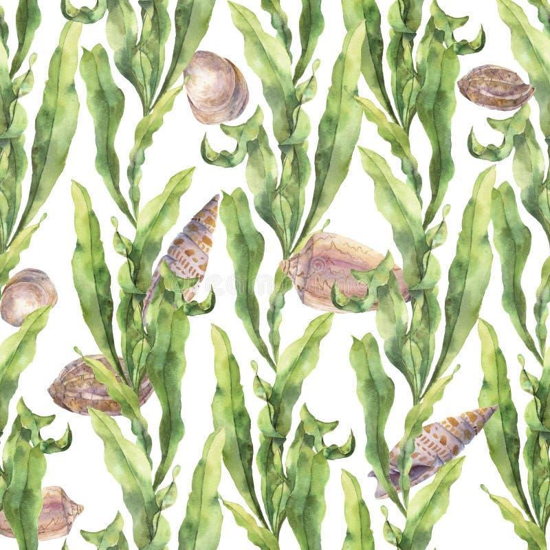 Modelo inconsútil de la acuarela con laminaria y conchas marinas Ejemplo floral subacuático pintado a mano con las hojas de las a ilustración del vector