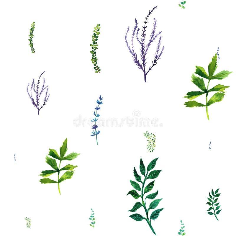Modelo inconsútil de la acuarela con las hierbas y las hojas ilustración del vector