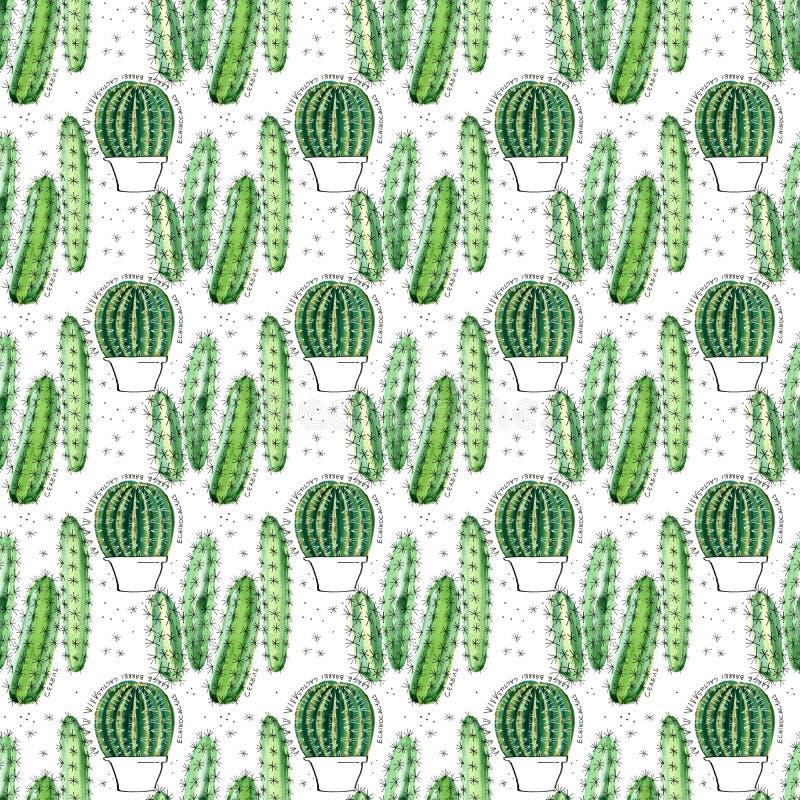 Modelo inconsútil de la acuarela con los succulents y los cactus stock de ilustración
