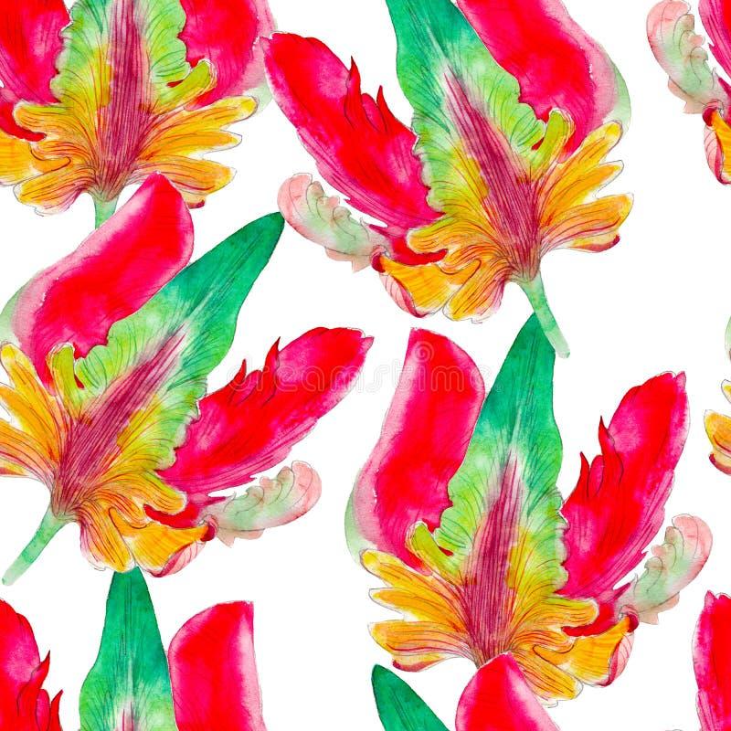 Modelo inconsútil de la acuarela de la flor del tulipán del loro Flores tropicales brillantes aisladas en el fondo blanco stock de ilustración