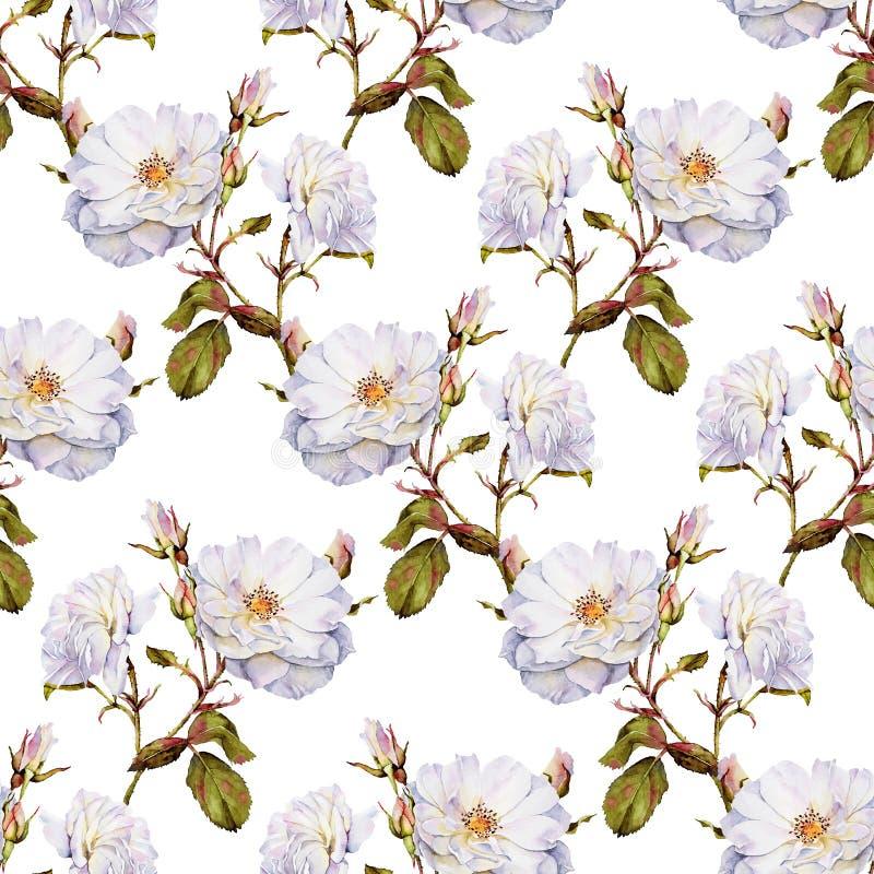 Modelo inconsútil de la acuarela del arbusto de rosas blancas libre illustration