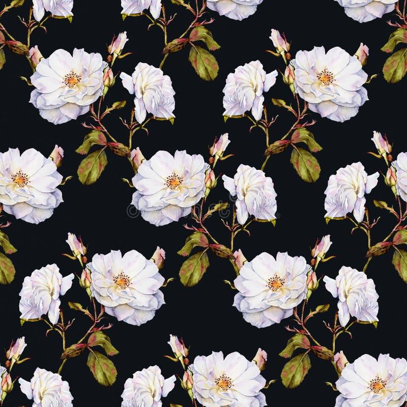 Modelo inconsútil de la acuarela del arbusto de rosas blancas stock de ilustración