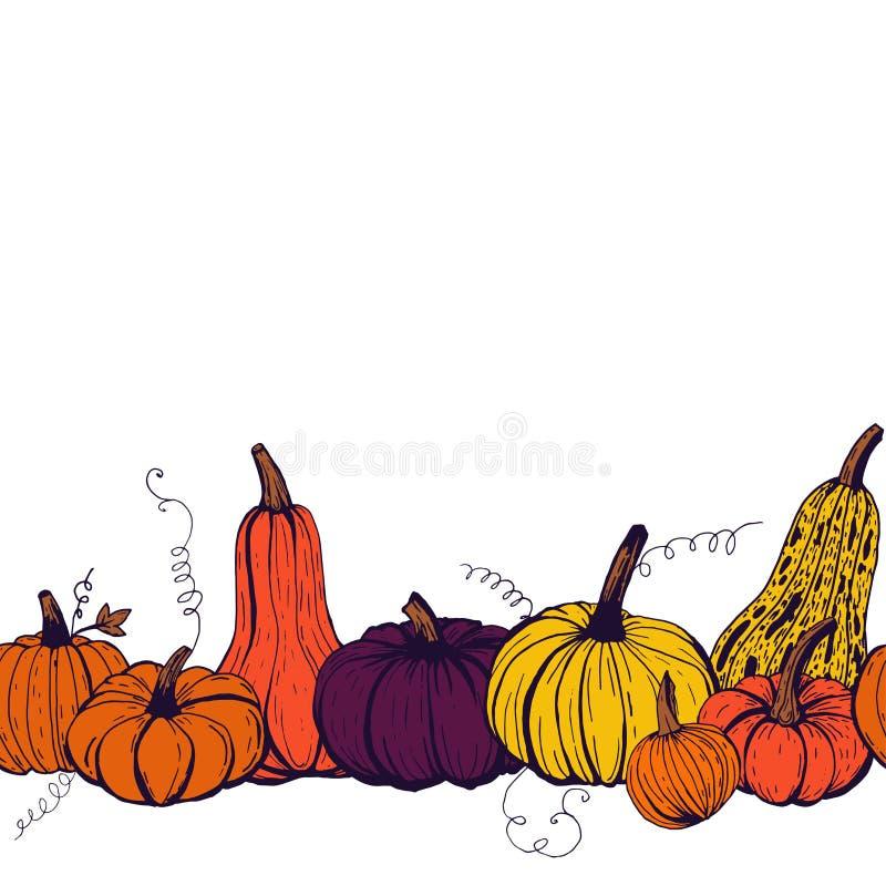 Modelo inconsútil de la frontera del esquema coloreado de las calabazas de otoño de diferentes tipos en el fondo blanco ilustración del vector