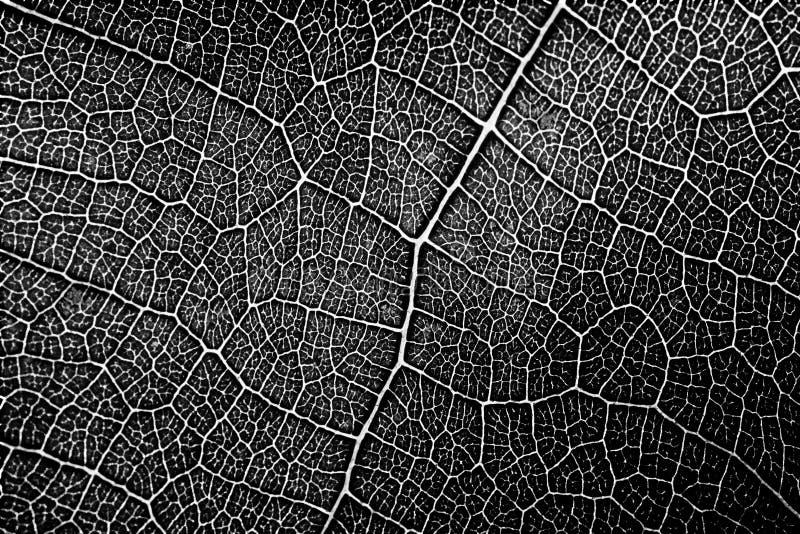 Modelo inconsútil de la textura de la hoja en blanco y negro imagen de archivo