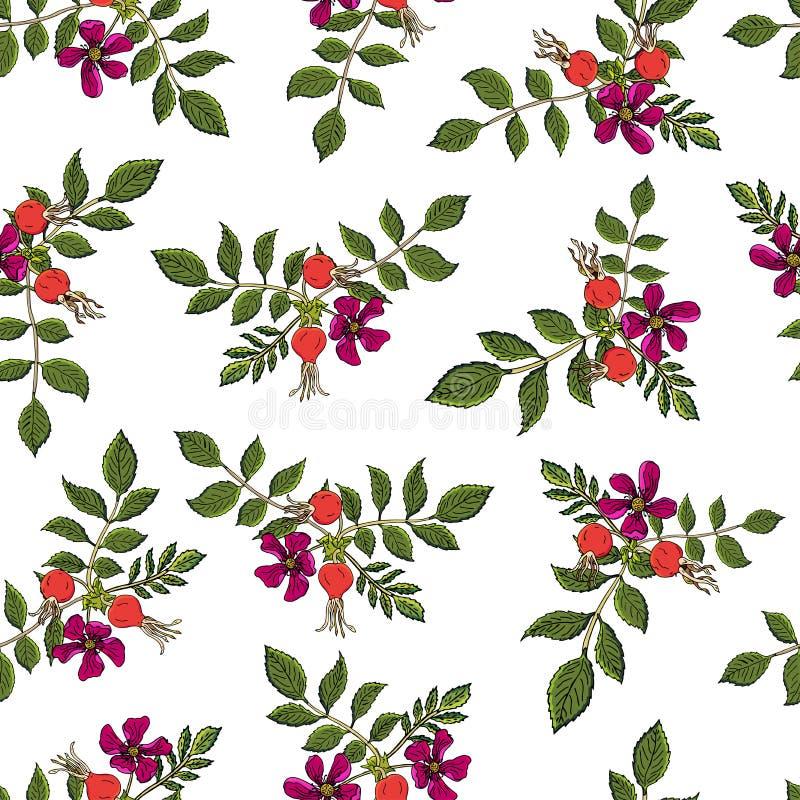 Modelo inconsútil de las bayas de Dogrose Las frutas color de rosa salvajes del fondo del vector con la hoja verde para el diseño stock de ilustración