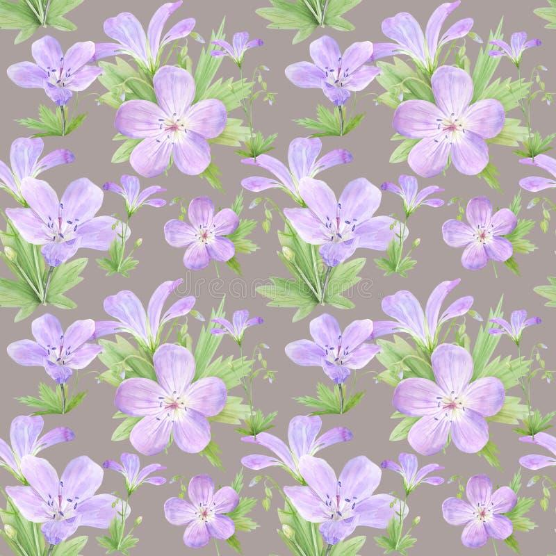Modelo inconsútil de las flores del geranio de la acuarela Perfeccione para el diseño web, cosméticos diseñan, empaquetan, materi libre illustration
