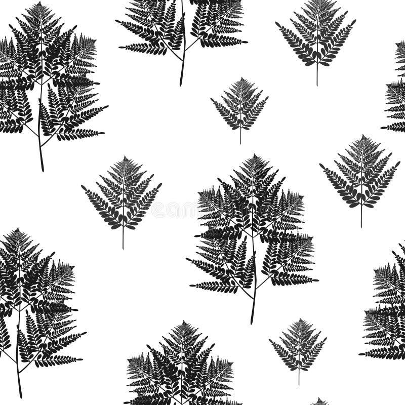 Modelo inconsútil de las hojas tropicales del helecho La planta de Bush deja la decoración en el fondo blanco libre illustration
